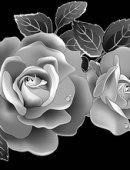 11 Белые розы