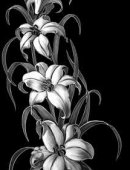 12 Белые лилии