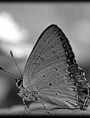 8 Бабочка