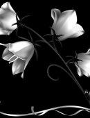 19 Цветы