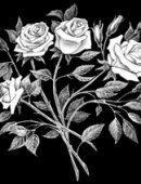 22 Розы