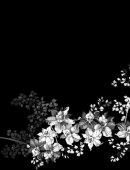 43 Цветы