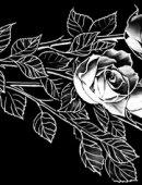 51 Розы