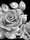 6 Розы