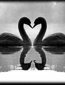 11   Влюбленные
