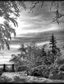 11   Зимний Лес