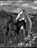 14   Лошади