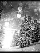 19   Красивый Зимний Лес