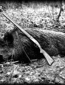 Кабан-Охота