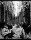 28 Лоси в лесу