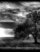 30  Одинокое Дерево