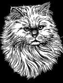 43   Котик