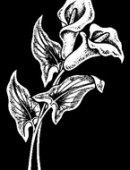 49   Калы-Цветы