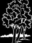 61   Деревья