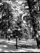 76 Пейзаж ёлочка в снегу