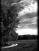 77 Пейзаж дорога в лес