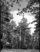 78 Пейзаж дорога в зимнем лесу