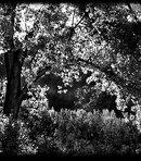 79 Пейзаж деревья