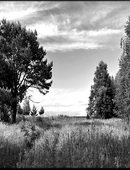 8   Лето Природа