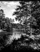 81 Пейзаж в лесу