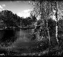 83 Пейзаж березки у воды