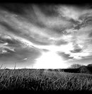 86 Пейзаж  красивое поле