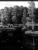 89 Пейзаж отражение в воде