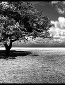 9   Одинокое Дерево